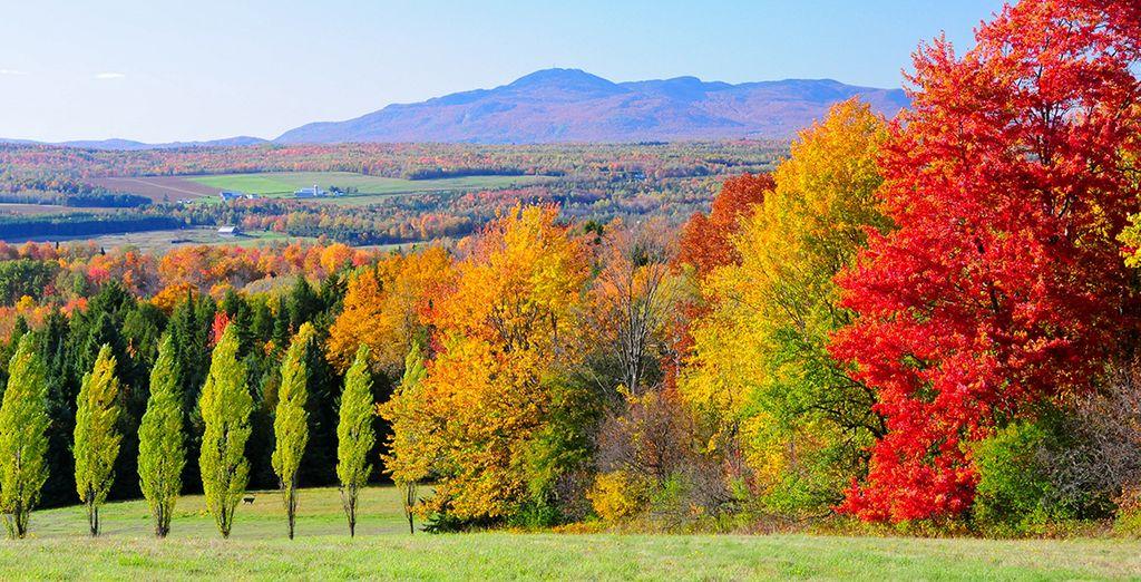 Partez au cœur des magnifiques paysages des Cantons de l'Est...