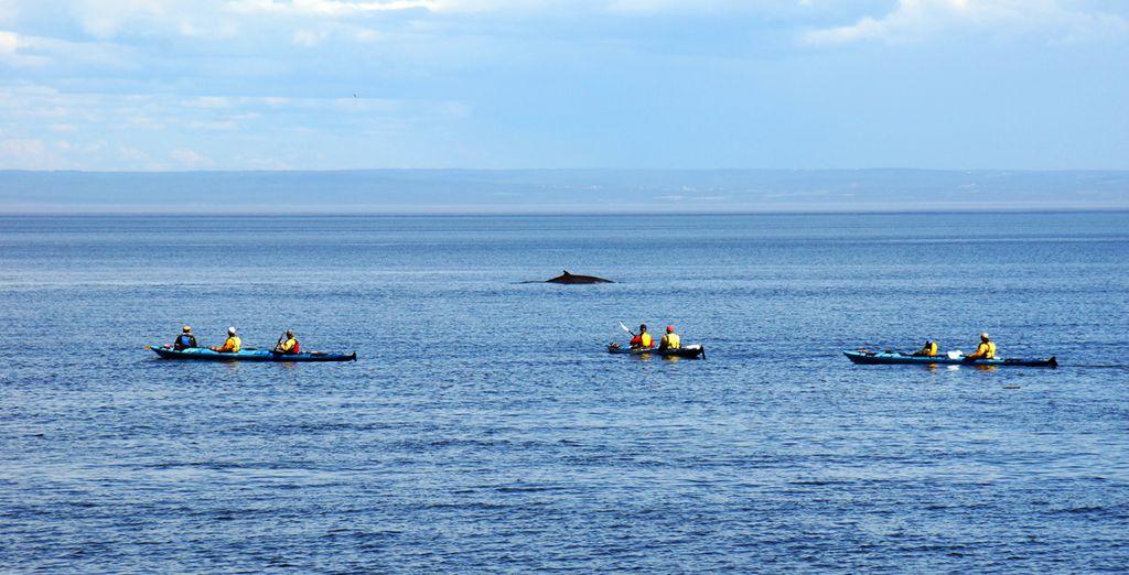 Puis vivez un moment magique lors d'une croisière d'observation des baleines