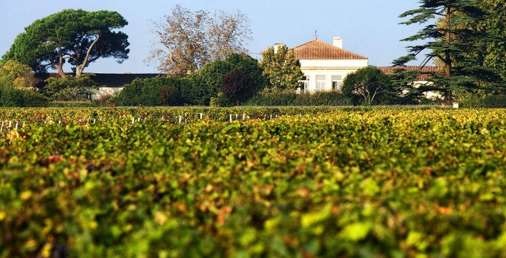 Entouré de vignobles