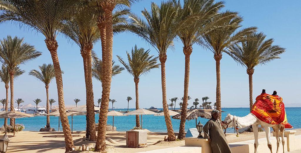 Partez à l'aventure et découvrez les mystères de l'Egypte ! - Combiné Hilton Resort Hurghada 5* & croisière sur le Nil Hurghada