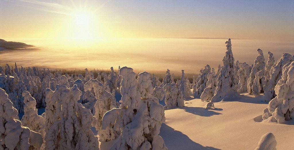 Découvrez la Laponie dans son manteau immaculé