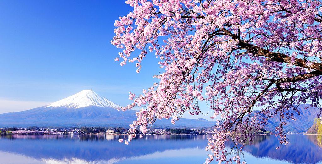 Découvrez le Japon, et laissez-vous envahir par sa beauté incomparable