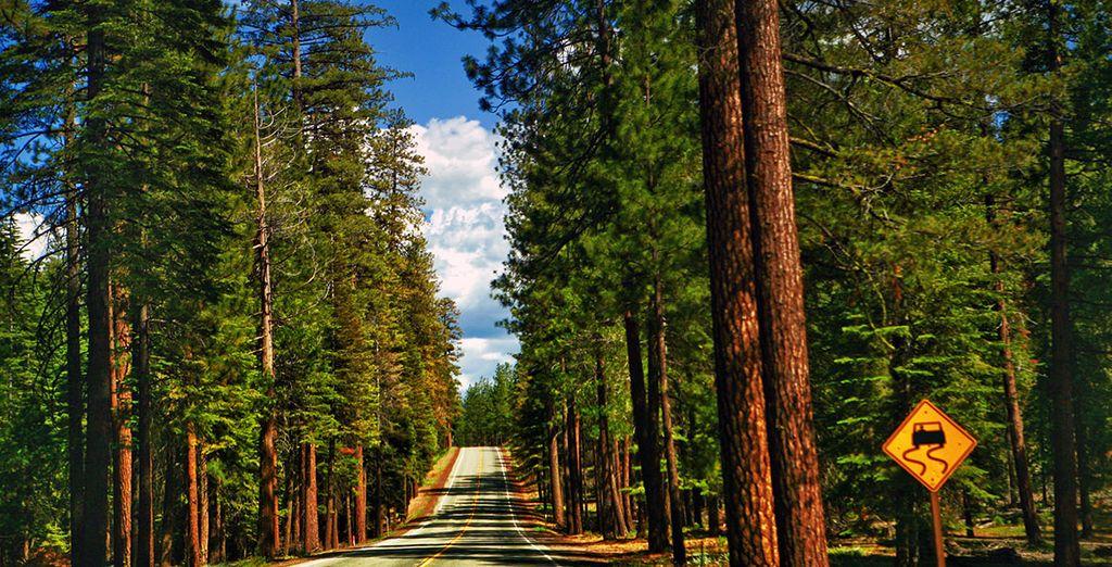 Yosemite, parc classé au patrimoine mondial de l'Unesco