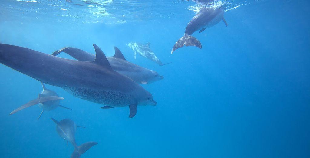 Plongée sous-marine avec les dauphins et découverte de la faune de l'île Maurice. Coraux, poissons et mammifères marins