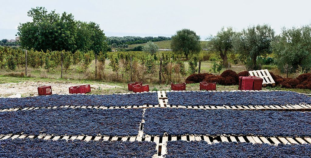 La coltivazione dell'uva è una delle tradizioni più antiche di questa terra