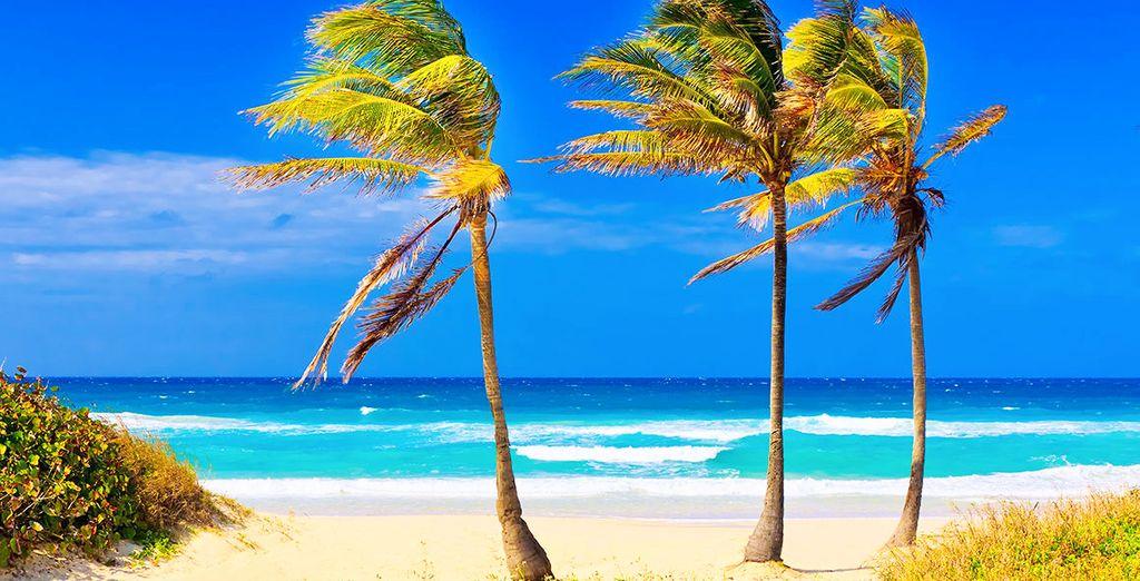 Godetevi il vostro Tour partendo da l'Avana proseguendo poi per Cayo Santa Maria per poi terminare sulle fantastiche spiagge di Varadero