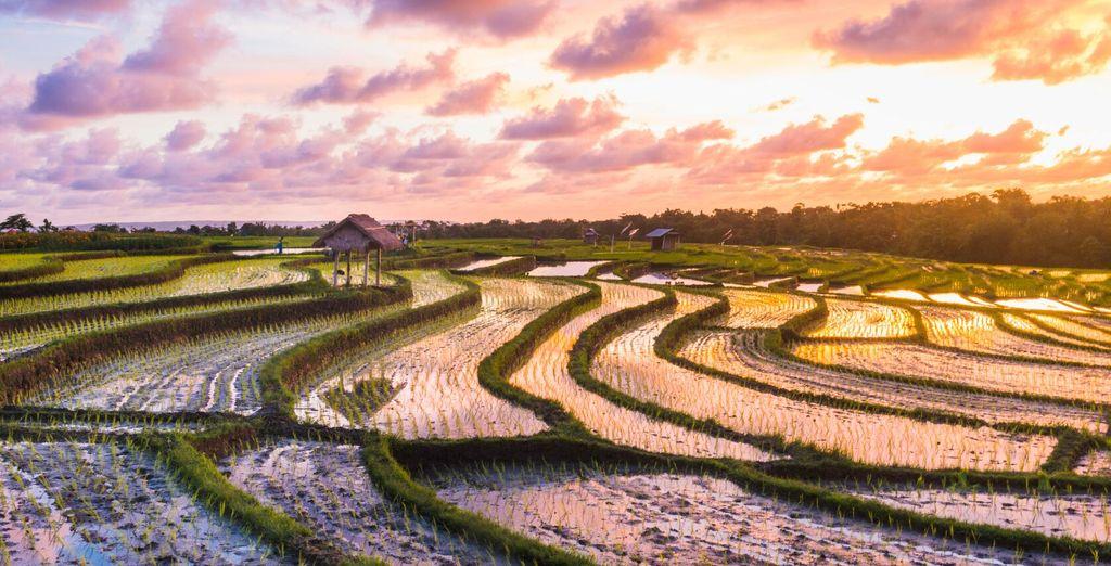 Prima tappa del vostro viaggio è da Ubud, immersa tra coltivazioni di riso e foreste