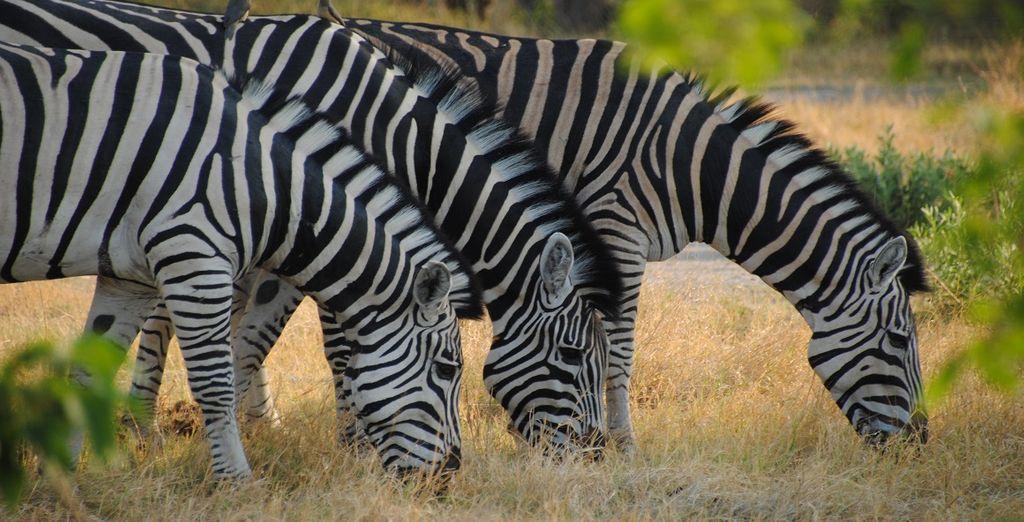 Ammirate le specie in via d'estinzione durante i fotosafari