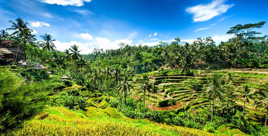 Ammirate la natura incontaminata di Bali che vi farà dimenticare i rumori e lo stress della vita quotidiana.