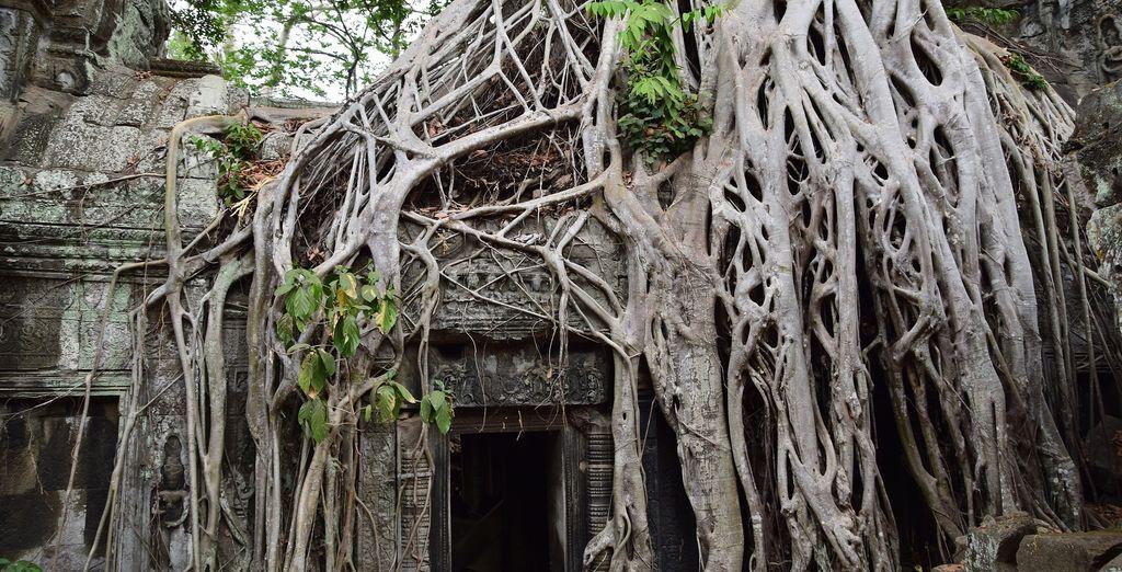 dove troverete il Ta Prohm, il famoso tempio nella giungla