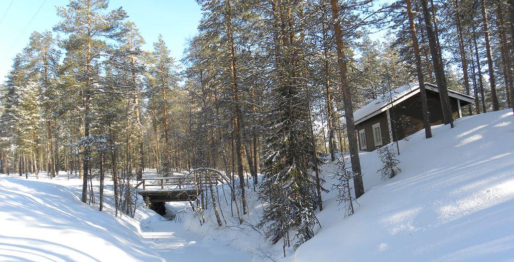 Immersi nelle nevi della Lapponia