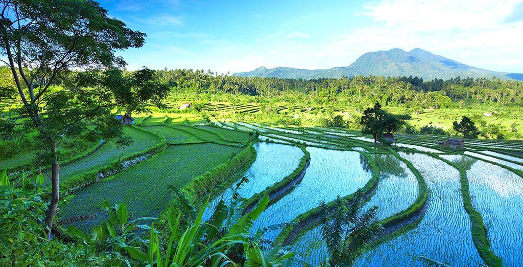 Benvenuti sull'isola di Bali, nella bellissima località di Ubud