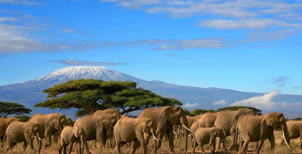 Ammirate tutta la bellezza degli animali dell'Africa