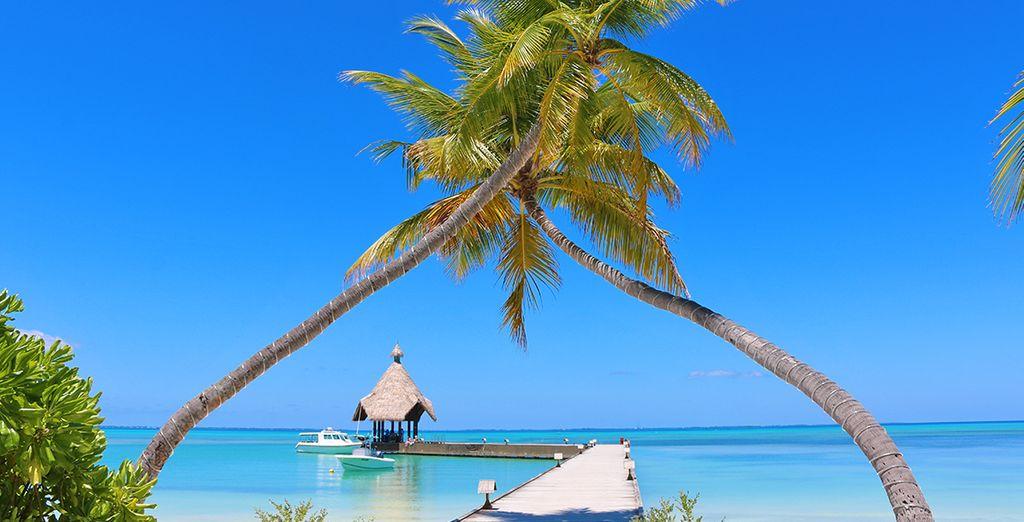 Canareef Resort Maldives 4* Voyage Privé : fino a -70%