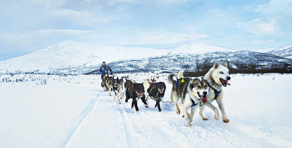 Fotografia di cani da slitta in Norvegia nel cuore delle montagne e delle foreste innevate