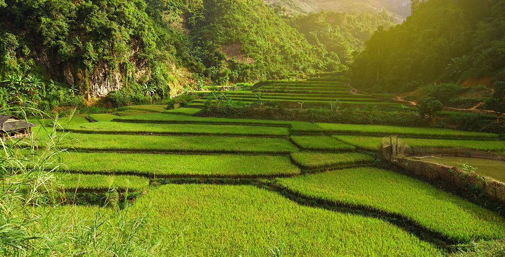 Risaie della valle di Mai Chau