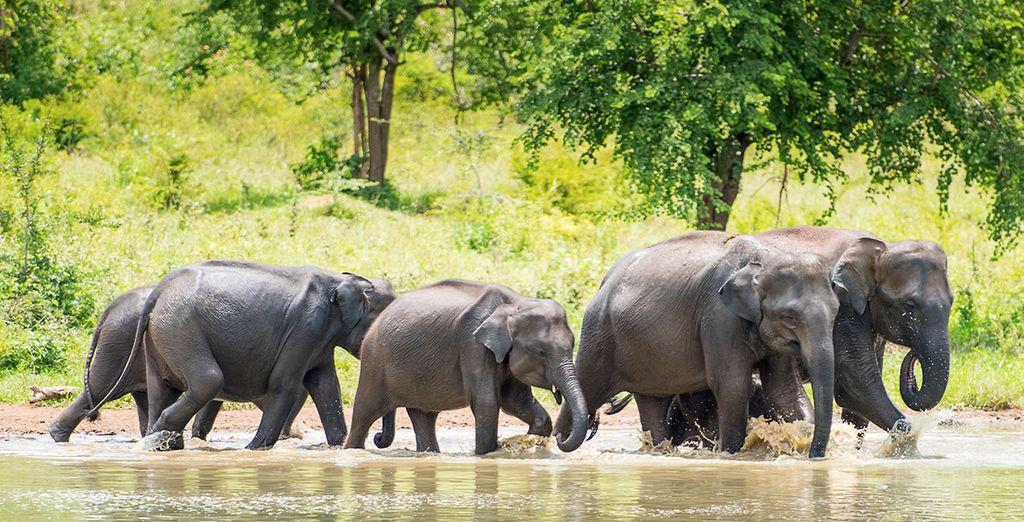 Tour privato dello Sri Lanka in famiglia