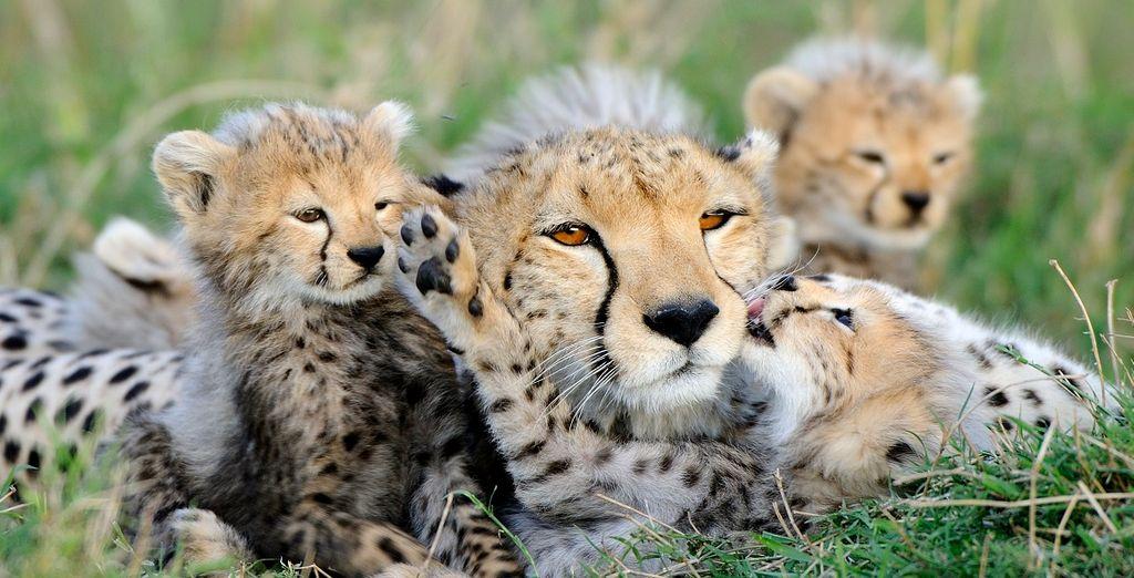 Safari indimenticabile nel cuore della Tanzania selvaggia