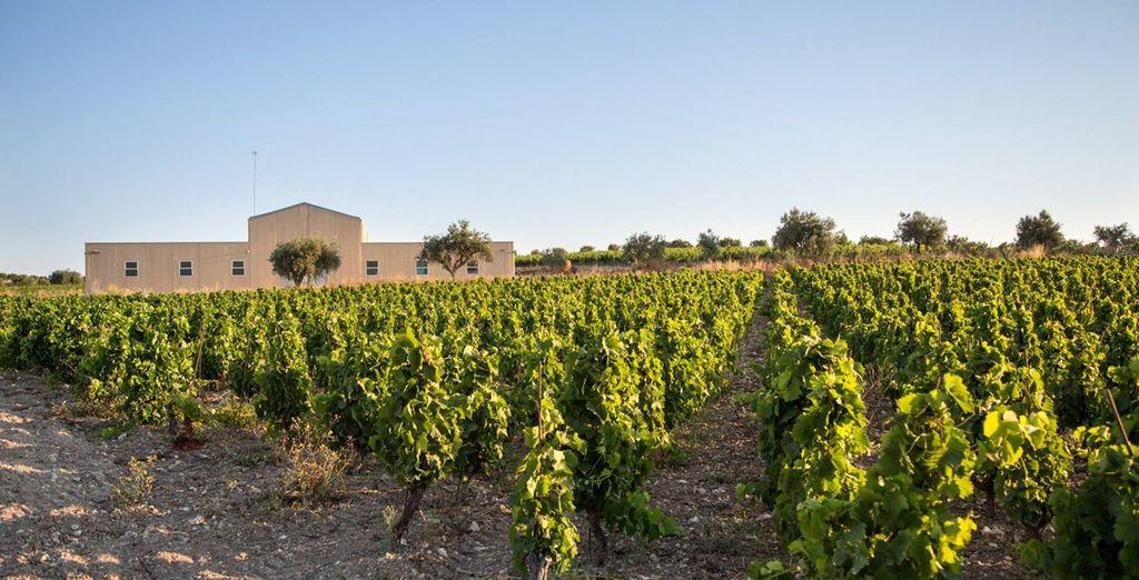 regalatevi un soggiorno alla scoperta delle eccellenze enogastronomiche della Sicilia