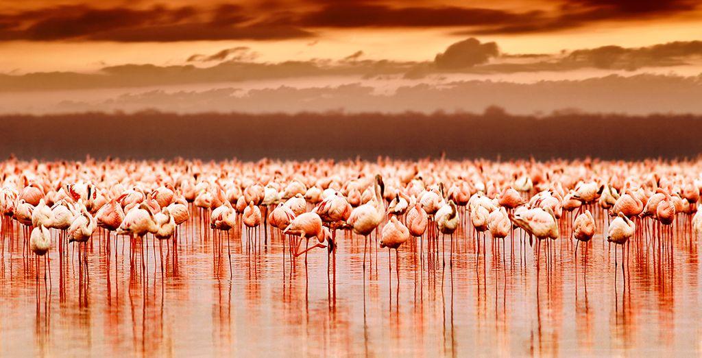 Geniet ook van een safari van 1 of 2 nachten door prachtige landschappen