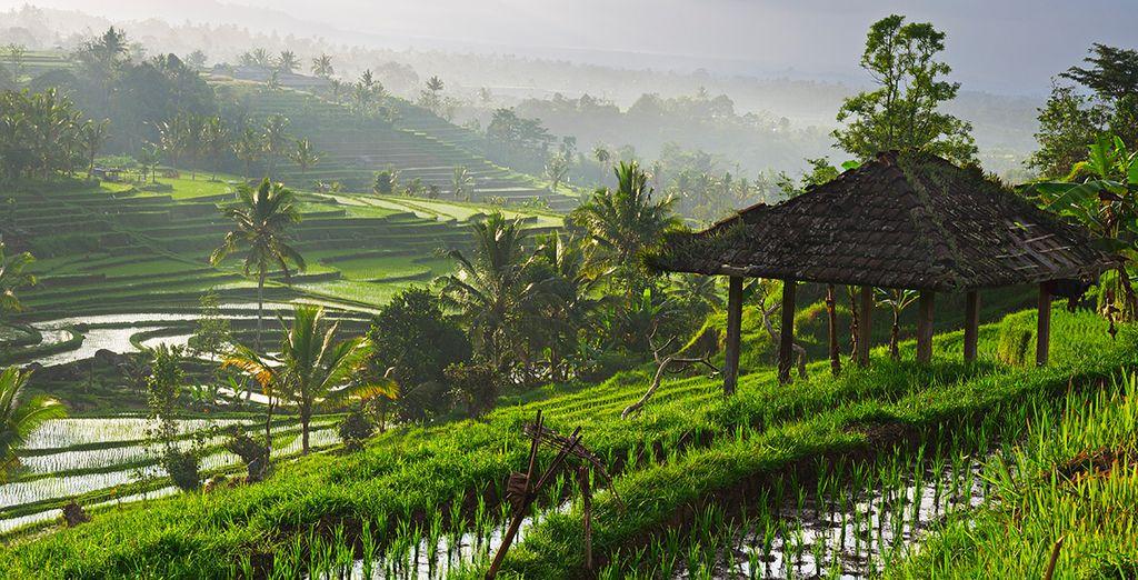 Ontdek de weelderige rijstvelden, tempels en de natuur van Ubud
