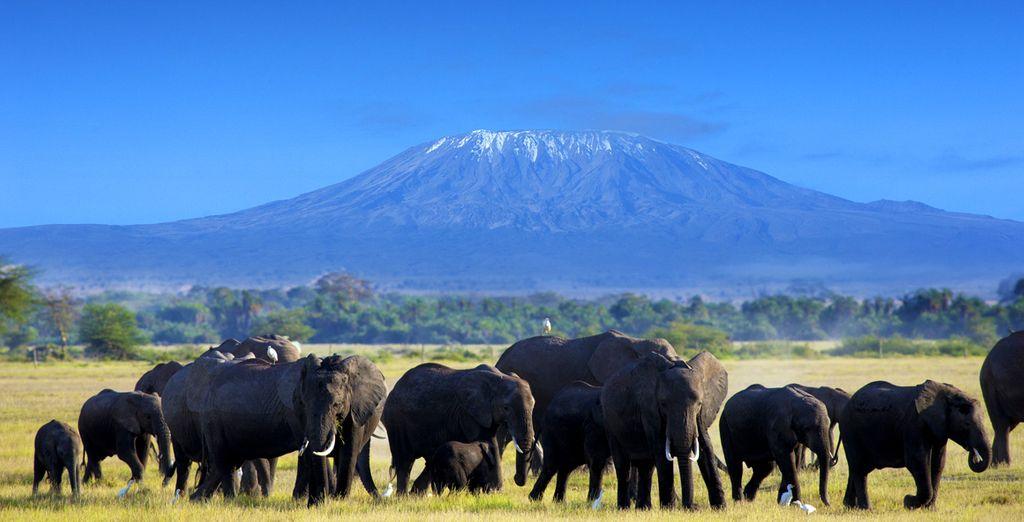 Een onvergetelijke safari