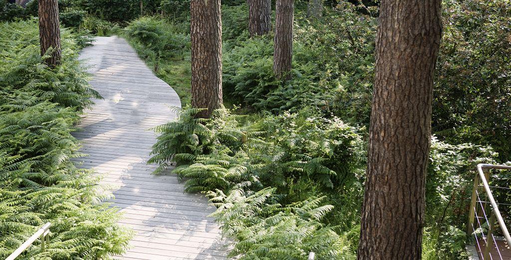 De heerlijke bosgeuren komen u tegemoet