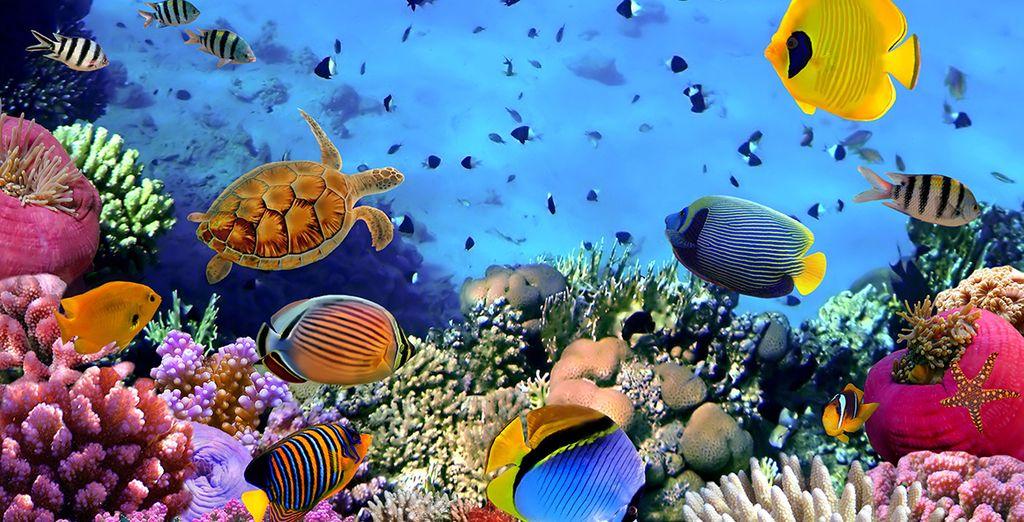 En de magische onderwaterwereld van de Caraïbische Zee