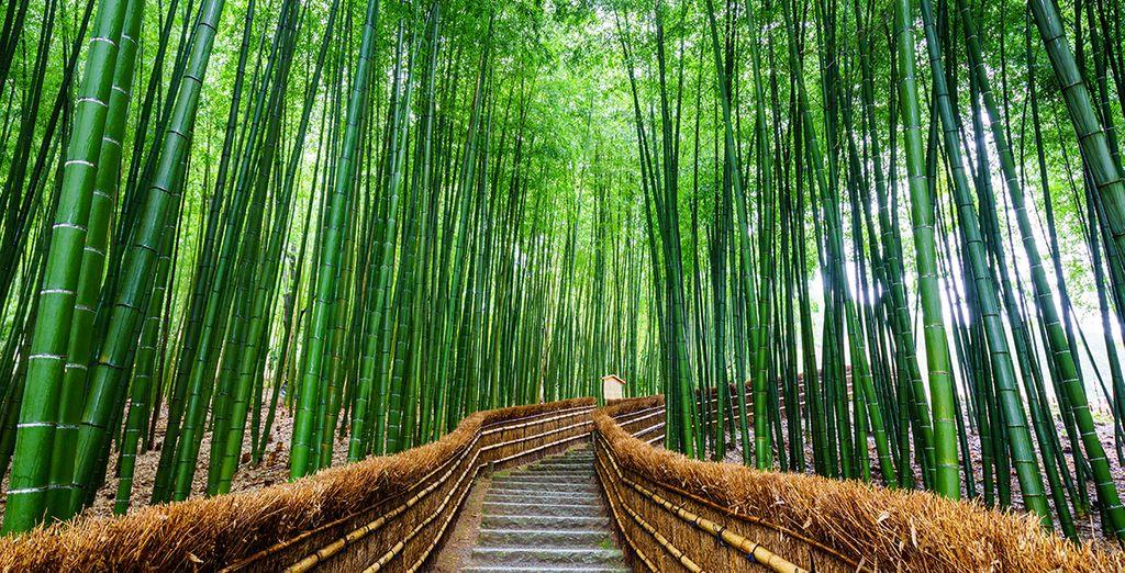 Net als de indrukwekkende Arashiyama bamboetuin