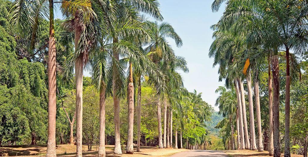 Maak een wandeling door de exotische Botanische Tuinen