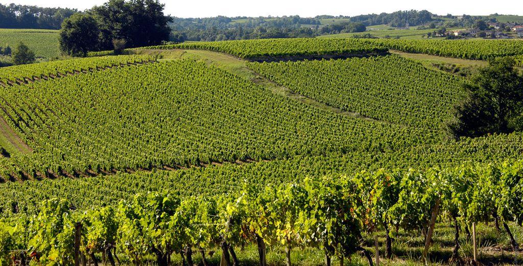 Van de prestigieuze wijngaarden van de Bordeauxregio...