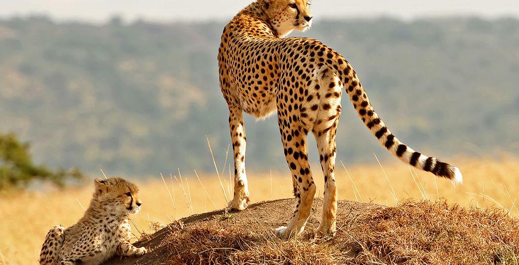 Ontmoet u prachtige dieren
