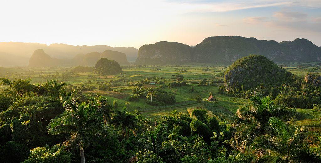 In een prachtige groene omgeving