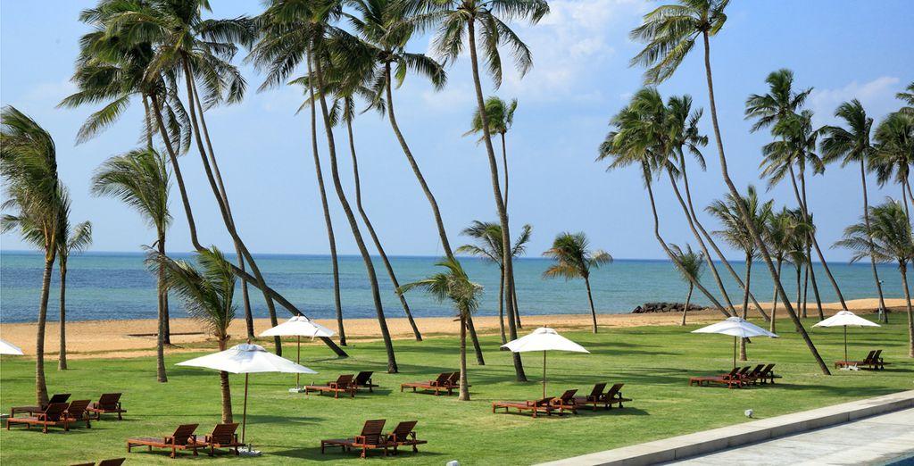 Geniet van het zandstrand, omzoomd door kokospalmen ...