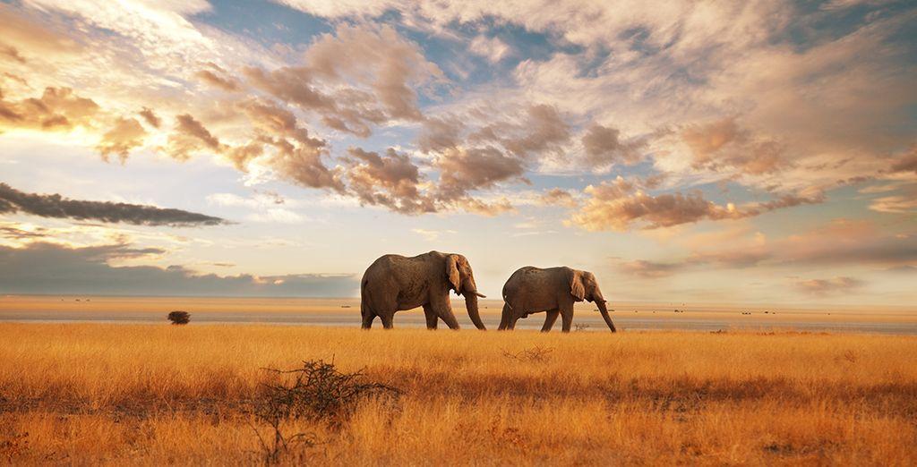 Discover magical Kenya