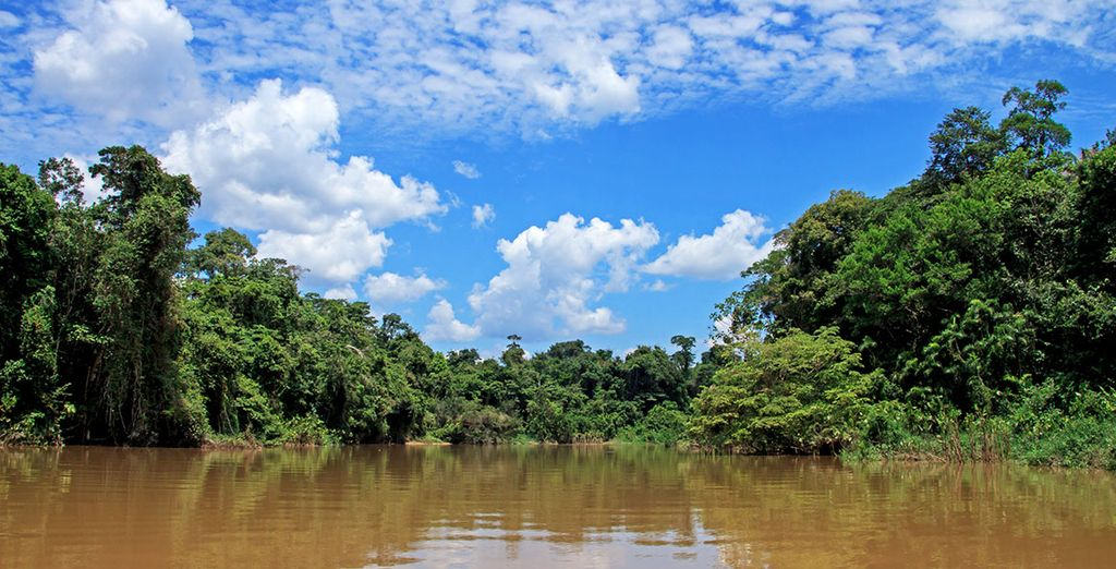 A tour in the Amazon rainforest