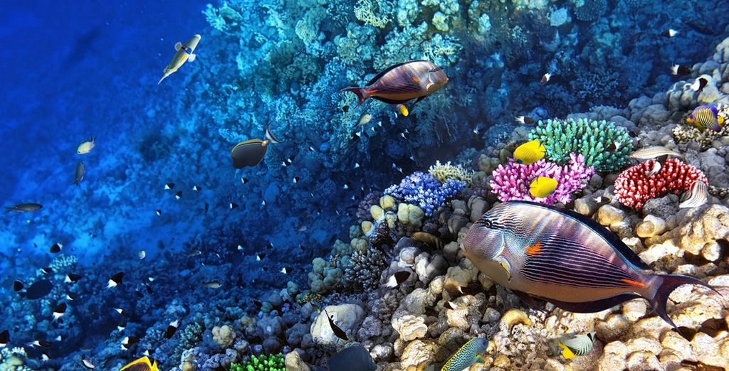 And discover the wealth of life and colour under the Caribbean Sea