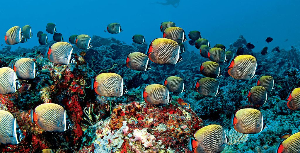 The Maldives are known for a colourful seabed