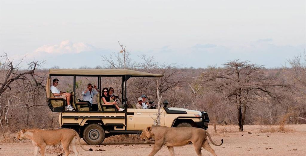 Here you'll head out on the experience of a lifetime with the Selous Safari