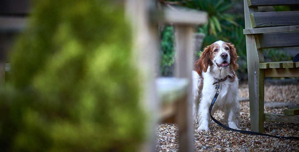 dog/pet friendly cottages UK