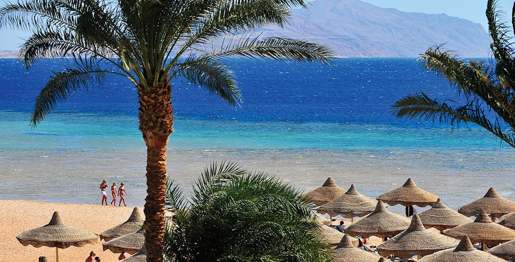 On Sharm el Sheikh's sandy shores