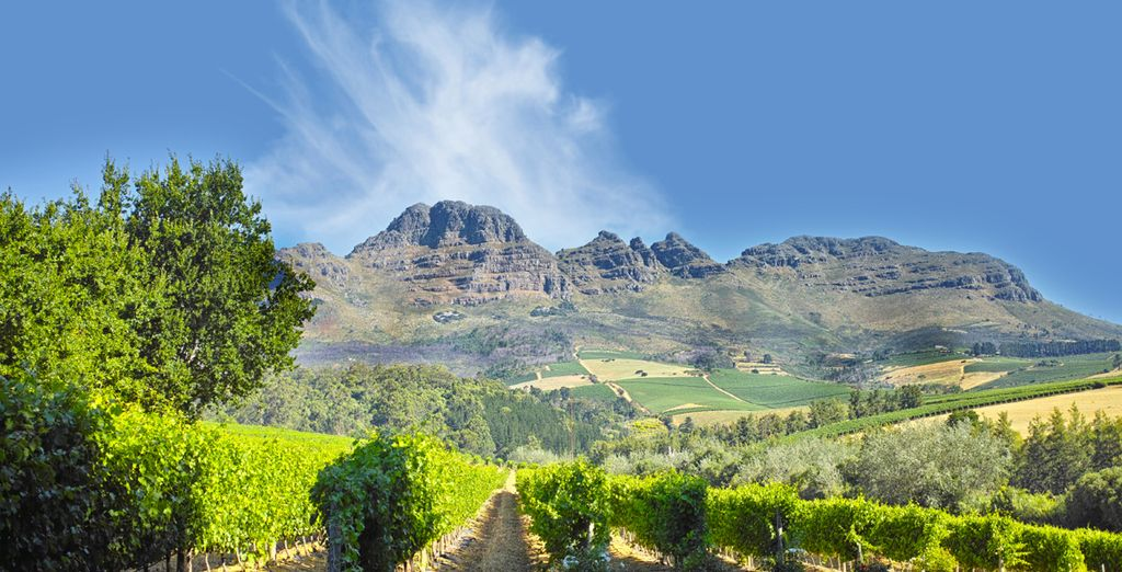 Then head to Stellenbosch and embark on a tasty cuisine walk