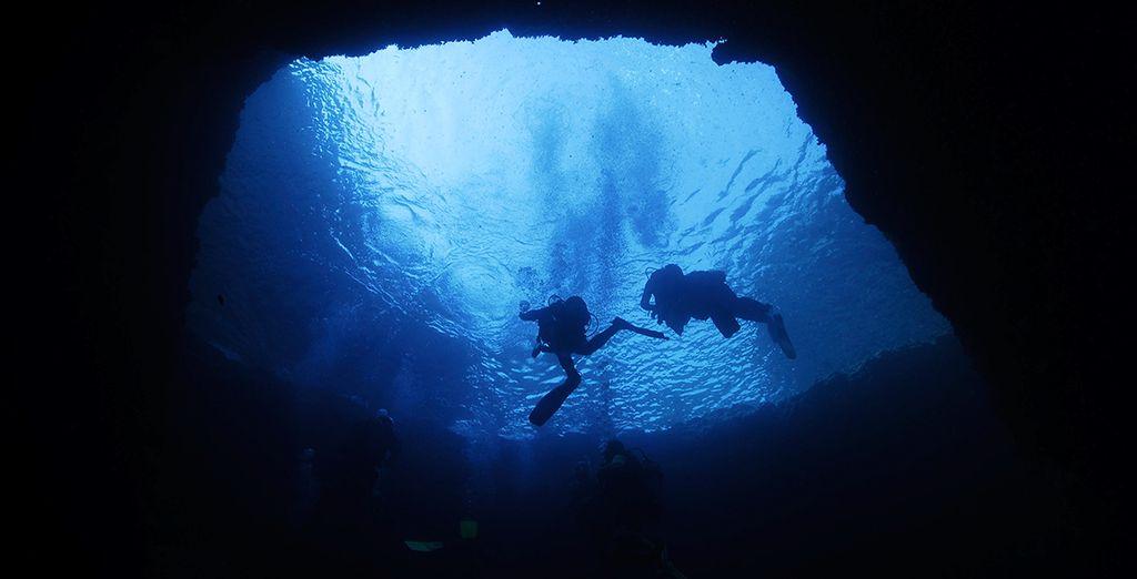 Or explore the amazing underwater marine life