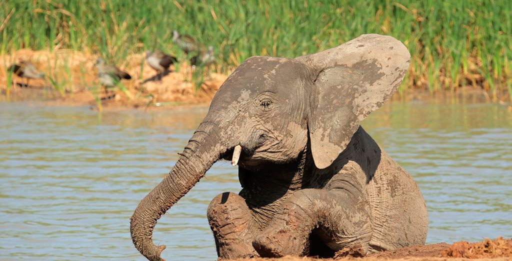 End your trip with a visit to Kruger National Park