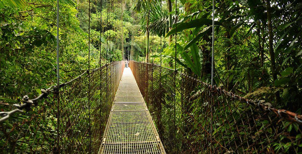 Venture into the jungle