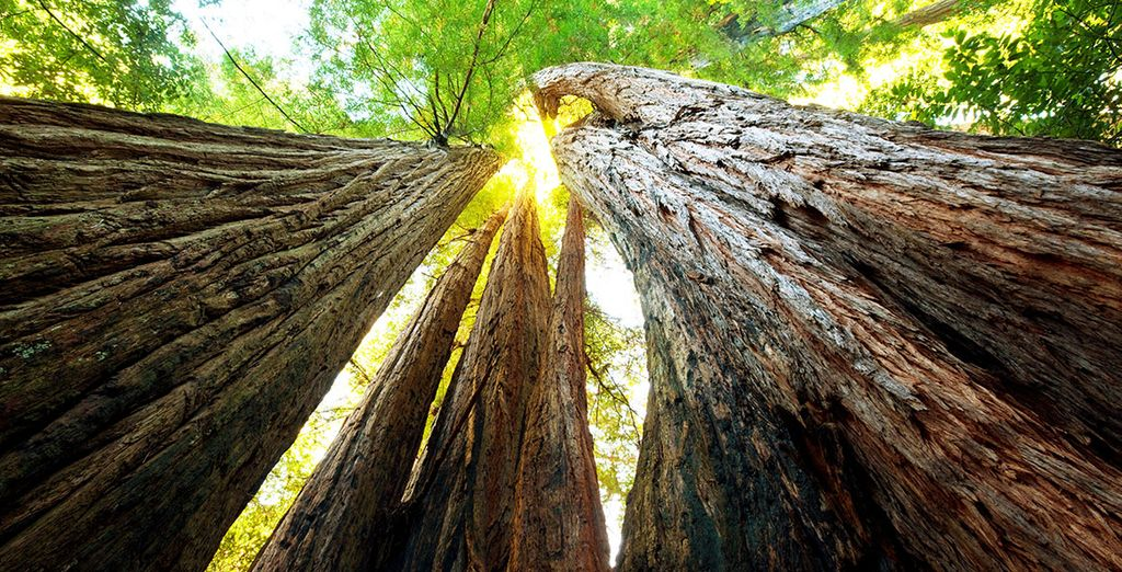 And the gigantic trees of Sequoia National Park