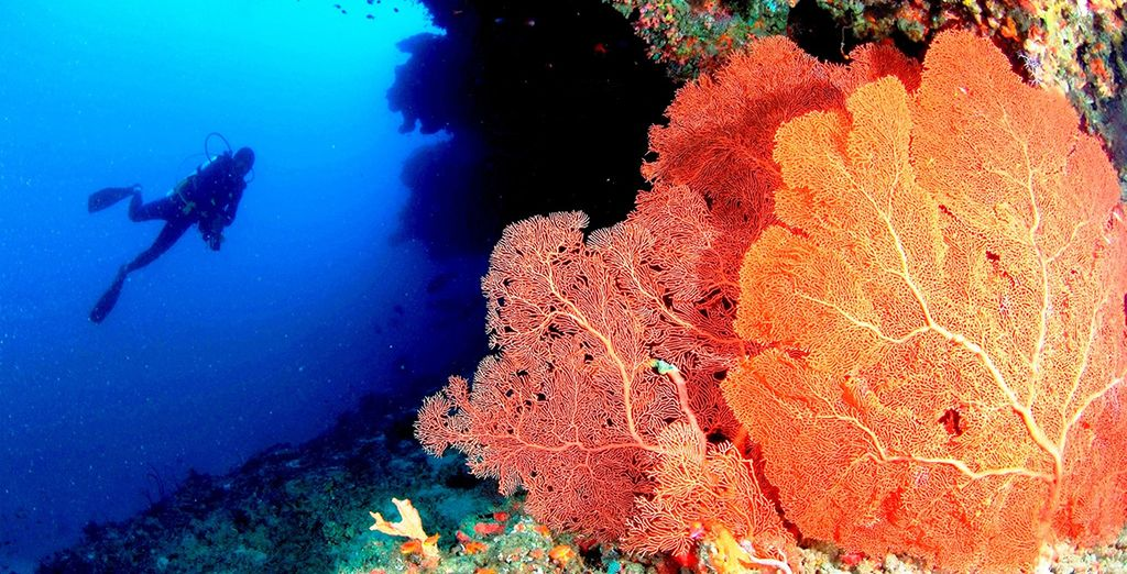 Delve into the colourful underwater world