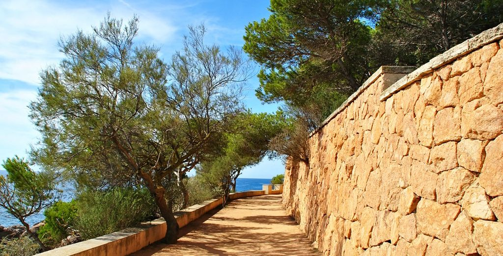 Spend some time wandering between the Mediterranean pine forest...