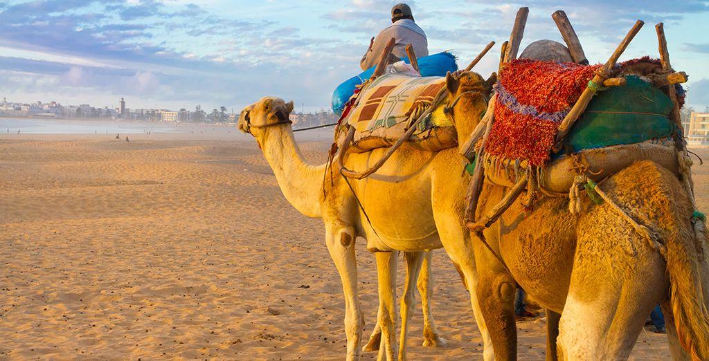 Discover Berber legends and desert dunes....