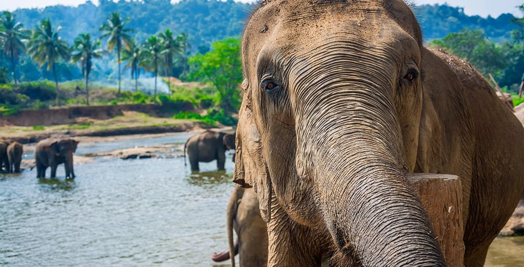Make friends at Millennium Elephant Foundation